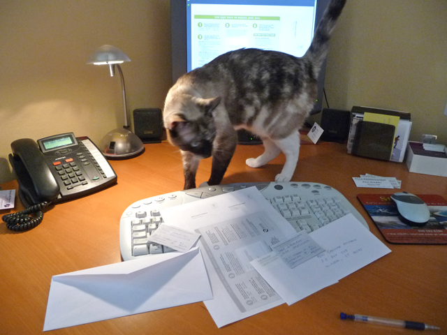 Cat Pema is auditing my junk mail reduction efforts :-)