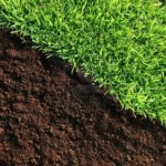 Handy Pointers on Feeding Your Lawn with Organic Fertilizers