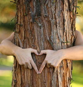 love for forests 270