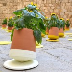 Innovative Rolling Flowerpot  from Spain for Healthier, Happier Plants