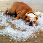Creative Ways to Keep Your Home Cooler Without AC or Whole House Fan